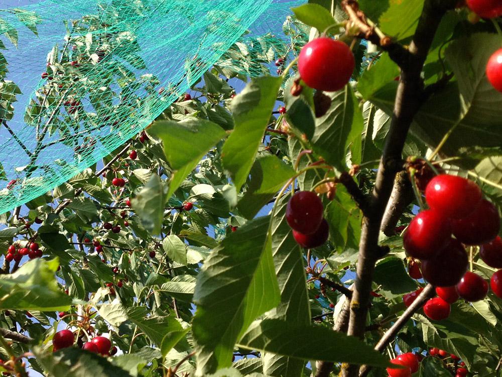 arcadia prodotti bio