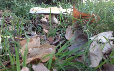 Tre appuntamenti per gli amanti dei funghi!