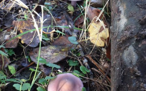 Ritorna l'appuntamento autunnale per gli amanti dei funghi!